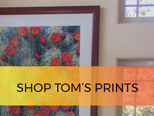 Shop tom till prints cta