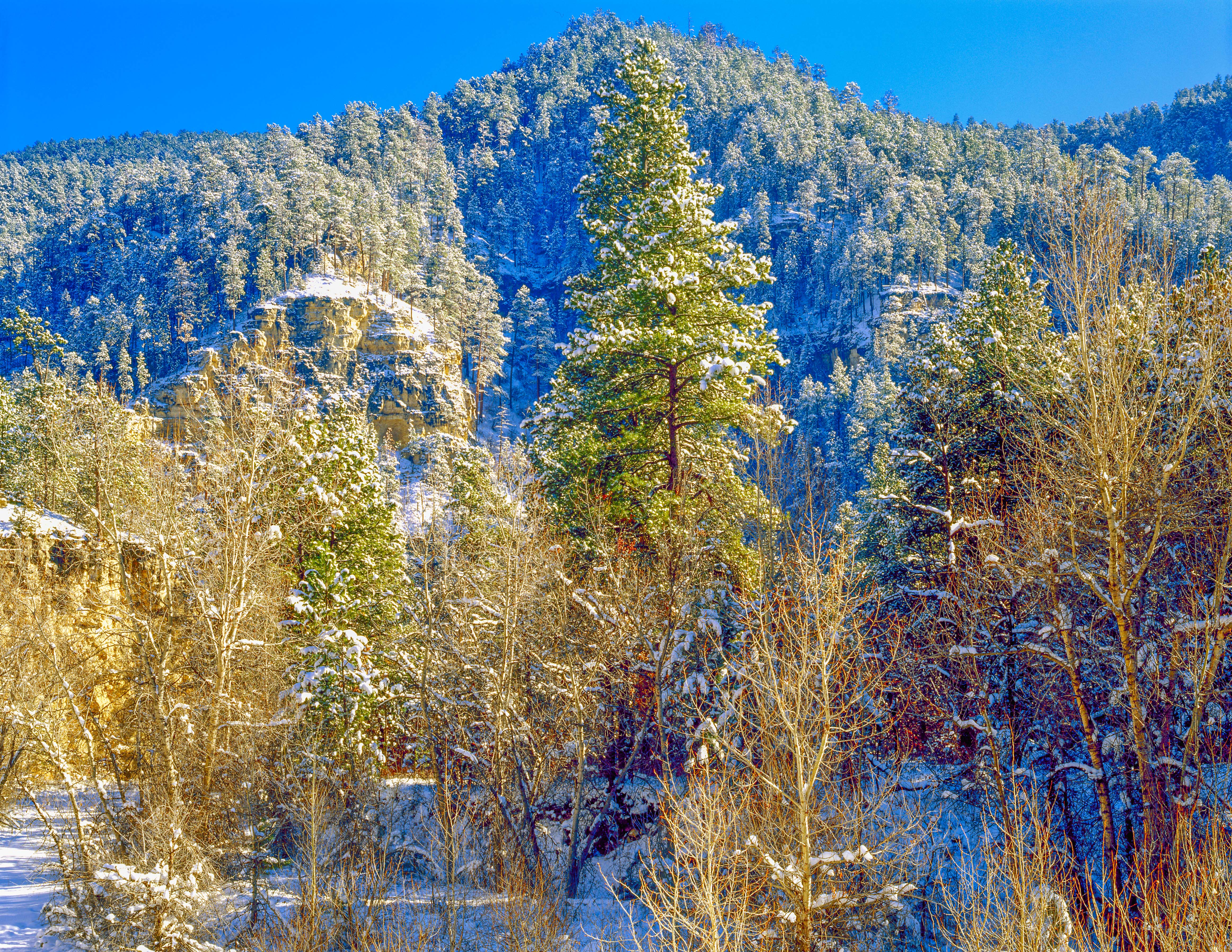 Fresh snow in Spearfish Canyon Photographed by Tom Till