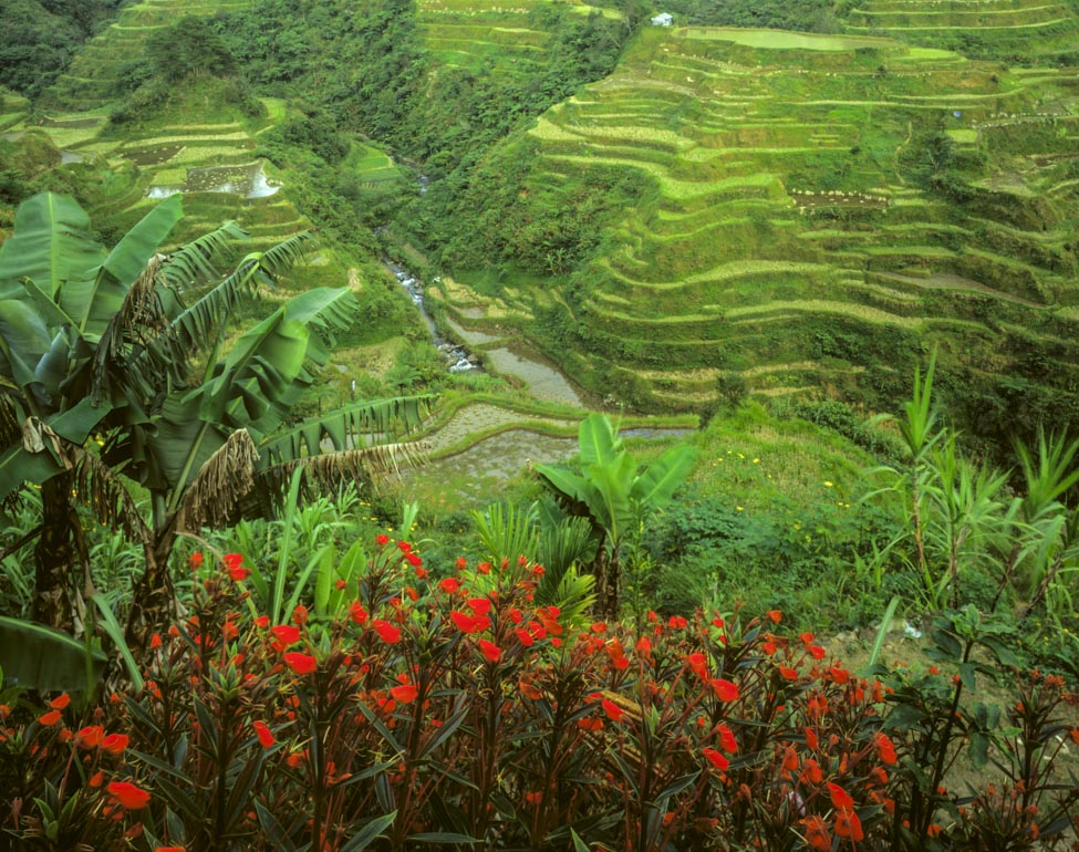 Ancient Rice Terraces at Bangaan Village, Banaue Photographed by Tom Till