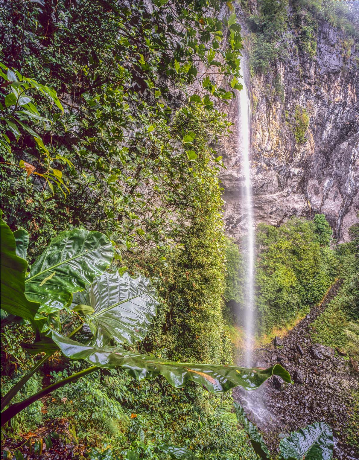 Pohnpei Island Waterfall, Micronesia photographed by Tom Till
