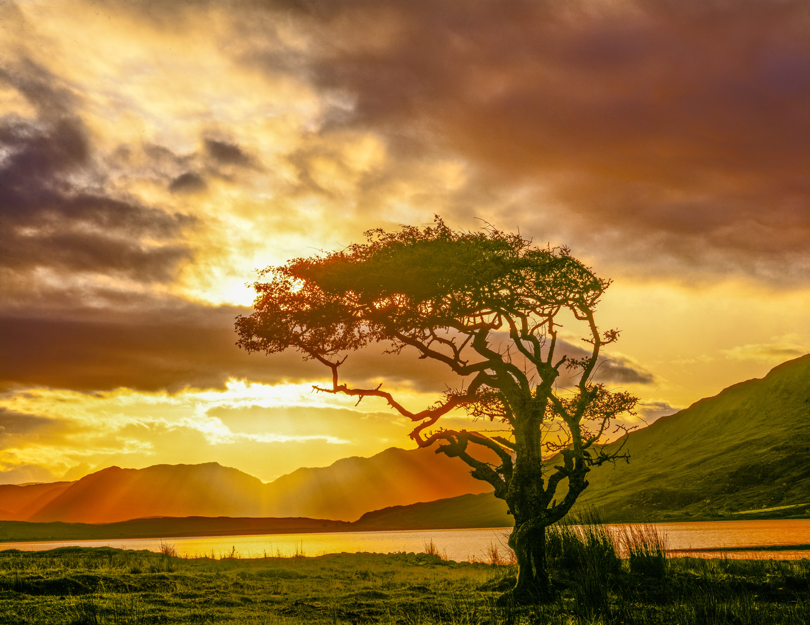 Myrtle tree at dawn, Connemara National Park, Republic of Ireland photographed by Tom Till