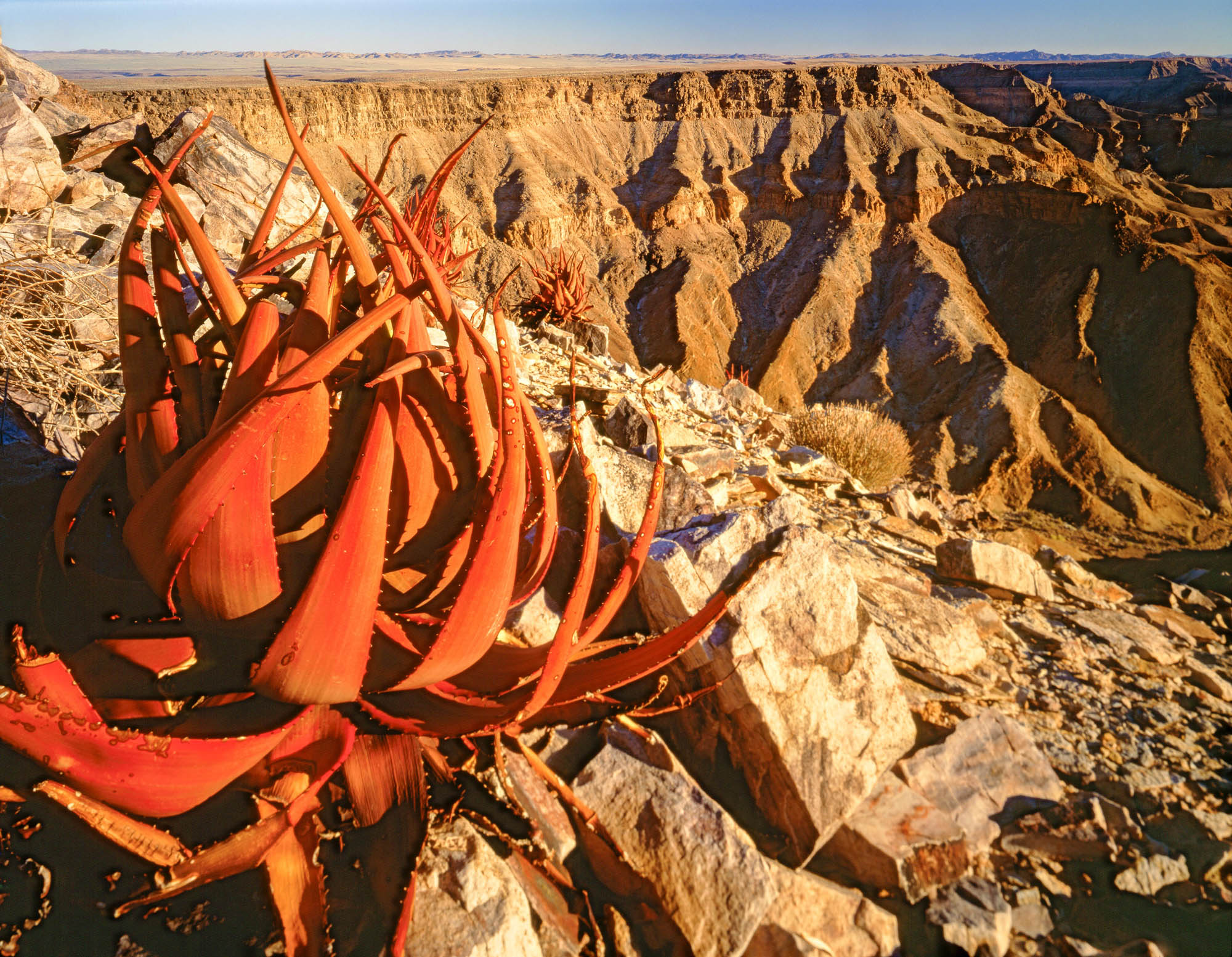 Aloe Plant, Fish River Canyon National Park, Namibia, Africa, photographed by Tom Till
