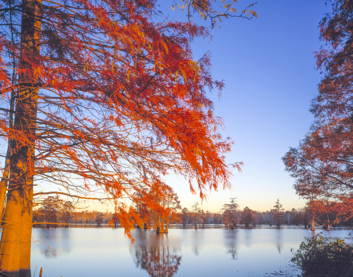 Horseshoe Lake State Conservation Area, Illinois, Bald Cypress photographed by Tom Till